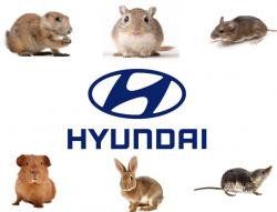 hyundai-soy-based-wiring-lawsuit-28129-250