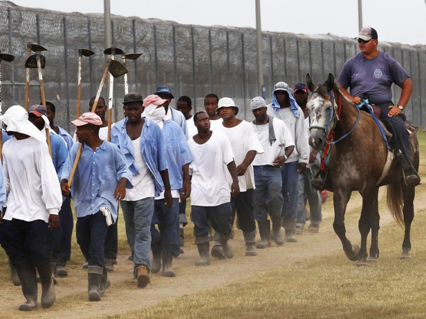 angola-prisoners-marched-to-farm-work-web-1